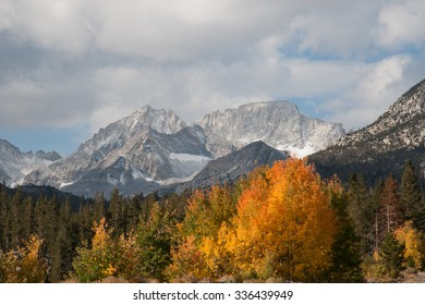 Aspens in fall color near Rock Creek and Little Lakes Valley in California's Eastern Sierra Nevada.  Mt Abbot and Mt Dade are visible.