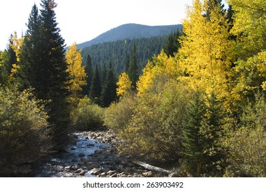 Aspens and firs in a mountain setting next to a running rocky stream