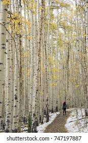 Aspens on the Colorado Trail - Kenosha Pass, Colorado