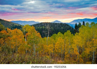 Aspens turning Yellow at Sunrise