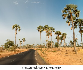 Asphalt country road leading through rural Senegal with palm trees, Senegal, Africa.