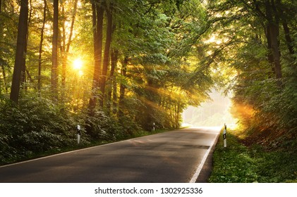asphalt forest road in a morning foggy misty forest with sun rays. Osnabruck, Germany
