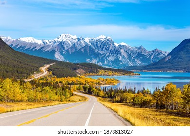 Asphalt highway leads to Abraham Lake in the Canadian Rockies. The yellow foliage of birches and aspens is mixed with green conifers. The first snow has already fallen on the peaks