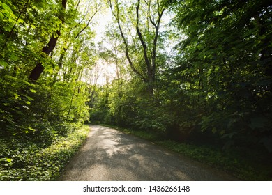 An asphalt pathway or a cycling path between thick green vegetation - trees and bushes with warm sunlight shining through.