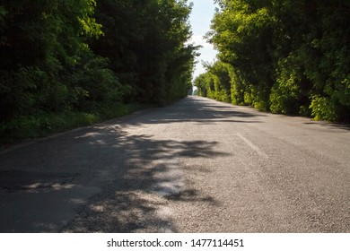 Asphalt road among a forest, tree branches converge above the road, selective focus