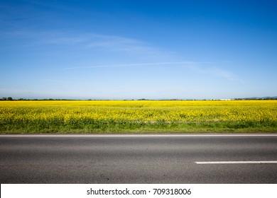 Asphalt road among the summer field. Beautiful countryside landscape