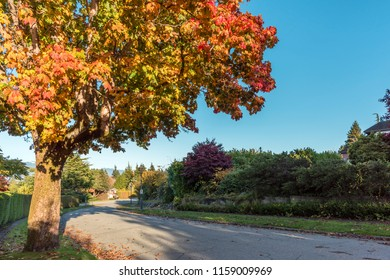 asphalt road in the autumn street with trees and fallen leaves, private residential house, green fence from plants, gates, blue sky