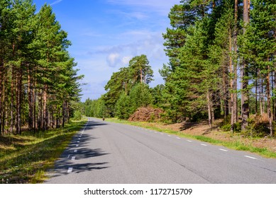 Asphalt road in a beautiful forest. Typical landscape of Saaremaa island, Estonia