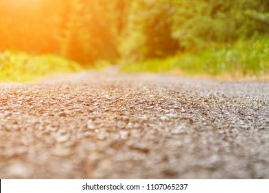 Asphalt road close-up in a green forest lit by sunlight