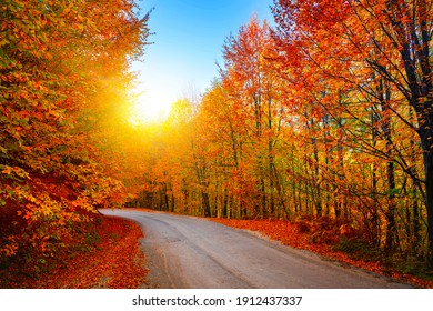 Asphalt road in the dazzling beauty of autumn colors. Uludag mountain national park, Bursa.