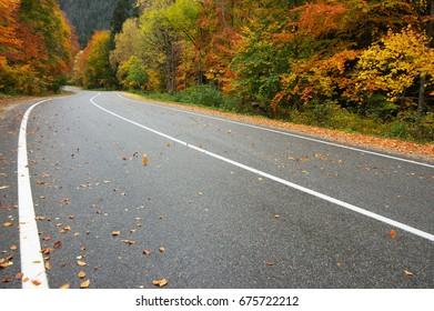 Asphalt road with fallen leaves in colorful autumn forest. Focus on foreground.