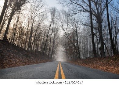 Asphalt road to foggy forest