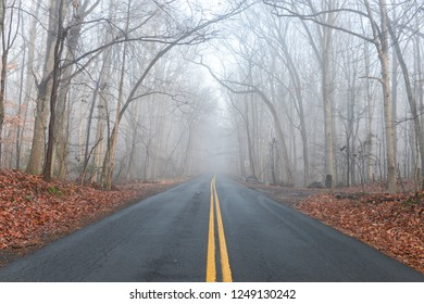 Asphalt road to forest in an foggy weather in autumn season