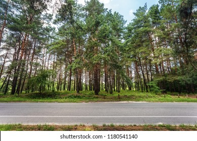 Asphalt road and forest, side view. Landscape in sunny day