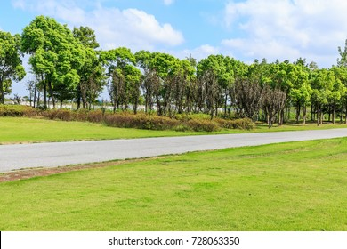 asphalt road and green tree in countryside