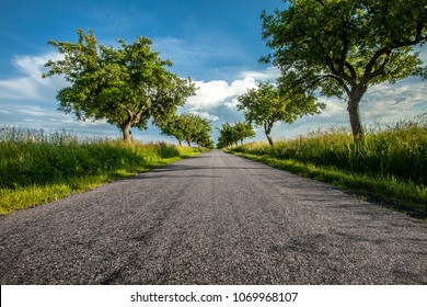 asphalt road with lying apple trees