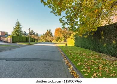 asphalt road on autumn street with trees and fallen leaves, green fence of plants, gate to private household, street lamp, blue sky