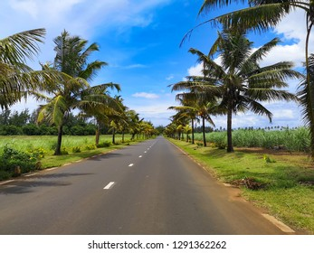 asphalt road with palms