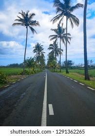 asphalt road with palms
