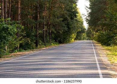 Asphalt road in a pine forest on a clear summer day