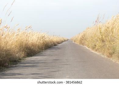 asphalt road in the reeds