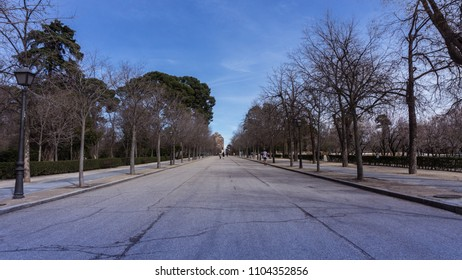 Asphalt road from the Retiro park in Madrid, with people running and dry winter trees around the street.