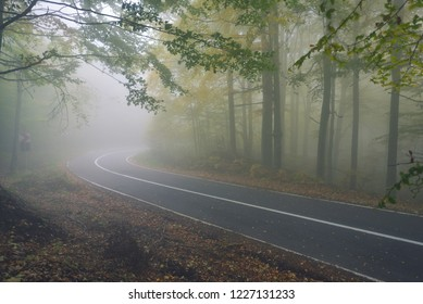 An asphalt road that goes through a misty dark misterious pine forest