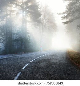 An asphalt road that goes through a misty dark misterious pine forest. French Alsace