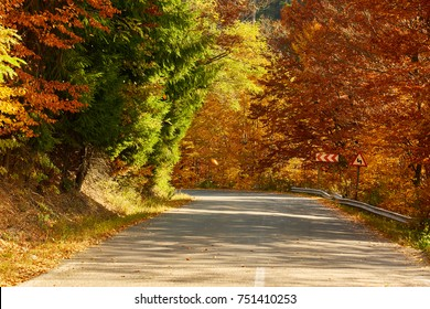 Asphalt road through colorful deciduous forest in the autumn