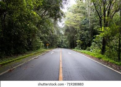 Asphalt road through the deep forest. Nature background.