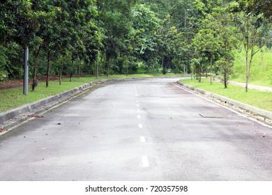 Asphalt Road through the forest