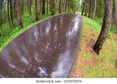 Asphalt road through the forest on a rainy day