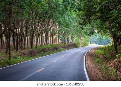 Asphalt road through the rubber trees farm in rural of Thailand