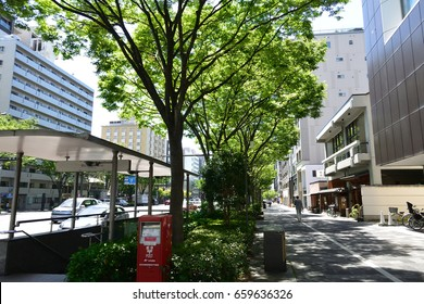 Asphalt road with tree in city
