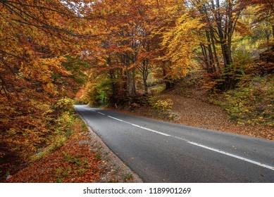 Asphalt road in the woods in autumn