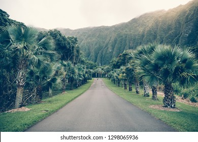 Asphalt tropical road with palm and mountains in Hawaii Ho'omaluhia botanical garden