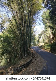 asphalted road between bamboo trees
