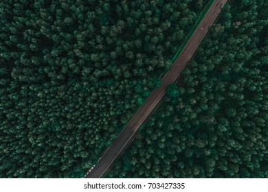 Asphalted road surrounded by pine forest from above
