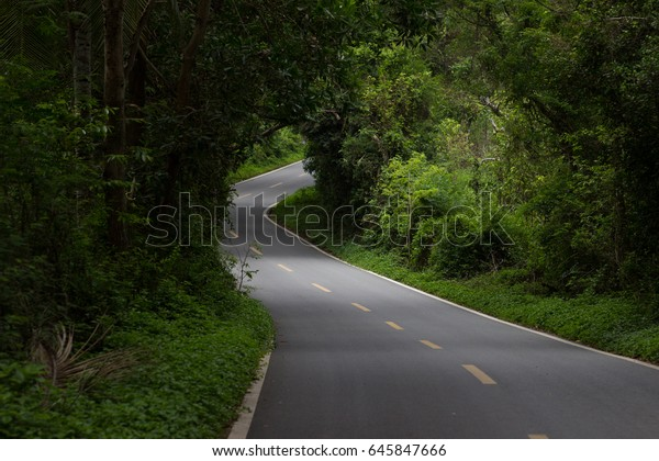 An asphalted winding road in a dense tropical forest with gleams through the trees through which sunlight penetrates
