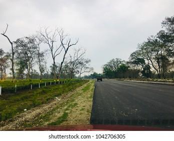 Assam Tea Garden Road