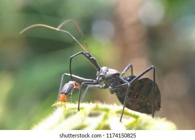 assasin bug eat