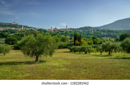 Assisi, Umbria Italy. Scenic cityscape of Assisi with Santa Maria degli Angeli, Duomo di San Rufino and Rocca Maggiore. Surrounded by Olive trees, green meadows and hilltop houses.