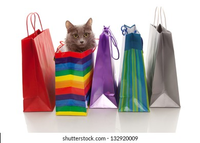 Assorted colored shopping bags and a cat in one of them  on a white background