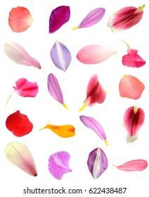 Assorted flower petals in seasonal