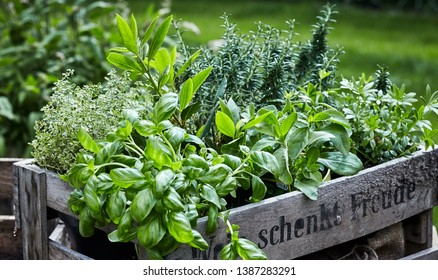 Assorted fresh herbs growing in pots arranged in an old vintage wooden wine crate outdoors in the garden in a close up view on leafy green basil