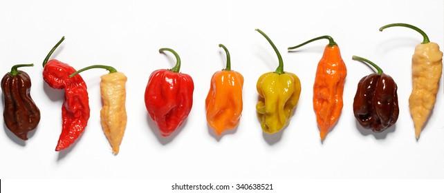 Assorted fresh organic peppers