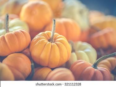 Assorted mini-pumpkins. A matte filter has been added