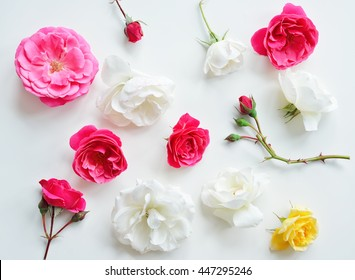 Assorted pink roses heads on white background. Roses and leaves scattered on a table, overhead view wallpaper. Flat lay, top view of flowers.