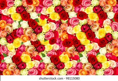 assorted roses. colorful flower background
