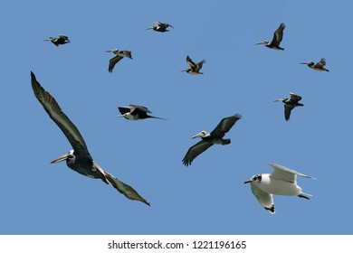 Assorted sea birds in fly isolated on a blue background